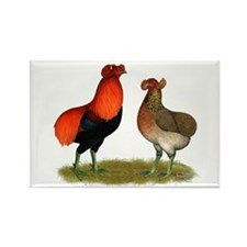Araucana Chickens Rectangle Magnet