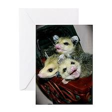 Possum Carriage Card