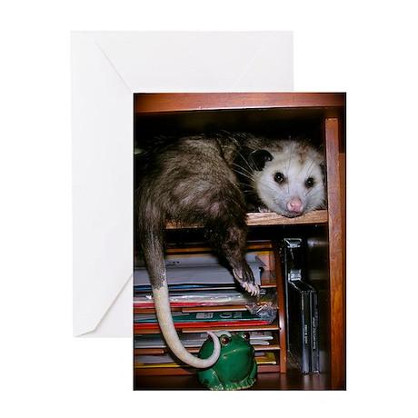 Possum Shelf Card