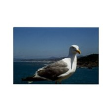 Seagull Rectangle Magnet (10 pack)