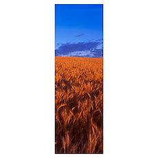 Wheat Field WA Poster