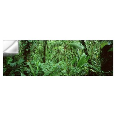 Costa Rica, Monteverde Cloud Forest Reserve Wall Decal