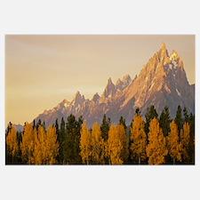 Aspens Teton Range Grand Teton National Park WY