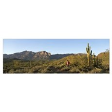 Hiker Superstition Wilderness Area Phoenix AZ Canvas Art