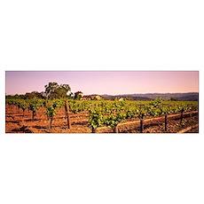 Sattui Winery St Helena CA Poster
