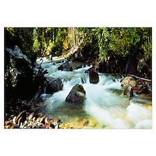 Mountain Stream CO