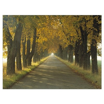 Road w/Autumn Trees Sweden Framed Print