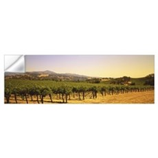 Vineyard Sonoma Co CA Wall Decal
