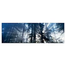 Sunrise Redwood National Park CA Poster