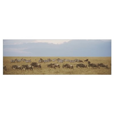 Wildebeests and Zebras Maasai Mara Kenya Africa Canvas Art