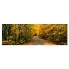 Forest Road near St. Hippolyte Laurentides Quebec  Poster