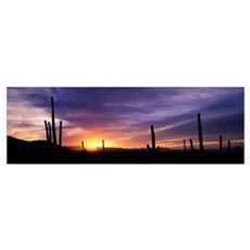 Desert Sunset Saguaro National Park AZ Poster