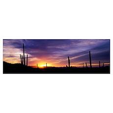Desert Sunset Saguaro National Park AZ Poster
