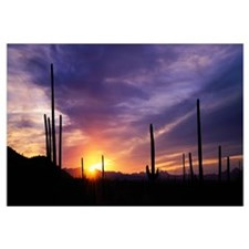 Desert Sunset Saguaro National Park AZ