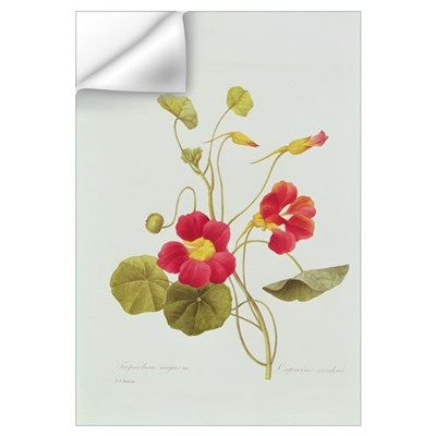 Nasturtium (coloured engraving) Wall Decal