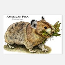 American Pika Postcards (Package of 8)