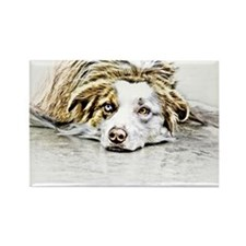 AUSTRALIAN SHEPHERD - DOG Rectangle Magnet