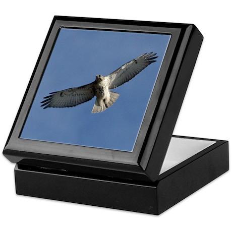 Juvenile Red-tailed Hawk Keepsake Box