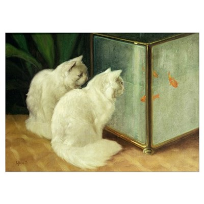 White Cats Watching Goldfish (oil on canvas) Poster