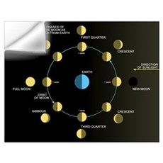 A diagram showing the phases of the Earths moon Wall Decal