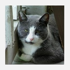 Grey and White Cat Art Tile
