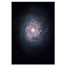 Face on spiral galaxy NGC 3982
