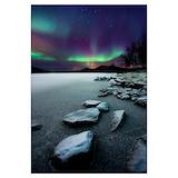 Aurora borealis polar bear Posters