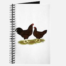 Buckeye Chickens Journal