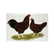 Buckeye Chickens Rectangle Magnet