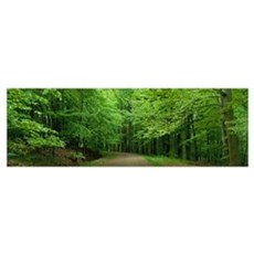 Road Through a Forest near Kassel Germany Poster