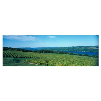Vineyards Finger Lakes Region NY Poster