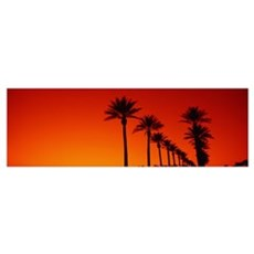 Date Palm Trees Stand Ready Sunrise Phoenix AZ Canvas Art