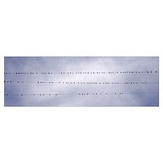 California, Flock of birds sitting on power line Poster