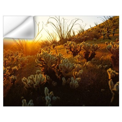 Arizona, Sonoran Desert, Ocotillo and teddy bear c Wall Decal