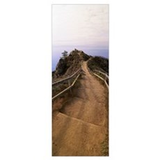 California, Stinson Beach, High angle view of wood Poster