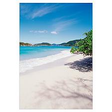 US Virgin Islands, St. John, Cinnamon Bay, Trees a