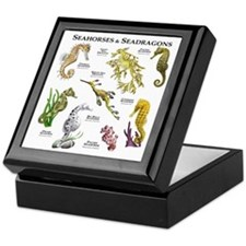 Seahorses & Seadragons Keepsake Box