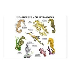 Seahorses & Seadragons Postcards (Package of 8)