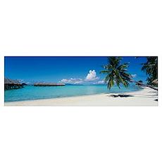 Palm tree on the beach, Moana Beach, Bora Bora, Ta Poster