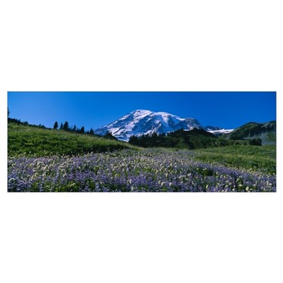 Wildflowers on a landscape, Mt Rainier National Pa Poster