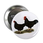 "Rhode Island Reds 2.25"" Button (100 pack)"