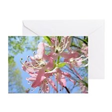 Spring's Arrival Greeting Cards (Pk of 10)