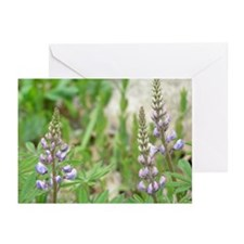 Blue Lupines Greeting Cards (Pk of 10)