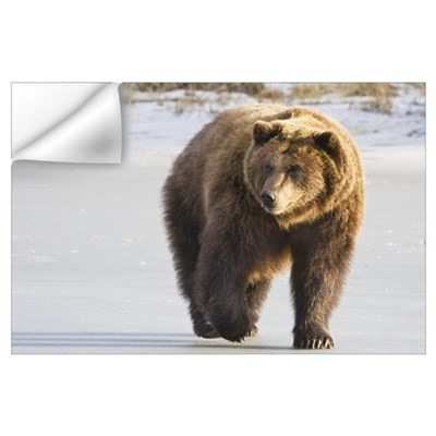 Grizzly walking in snow at the Alaska Wildlife Con Wall Decal