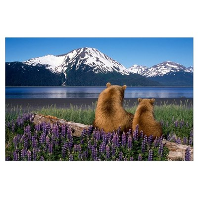 Grizzly sow and cub sit on log and view Turnagain Poster