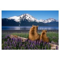 Grizzly sow and cub sit on log and view Turnagain  Framed Print