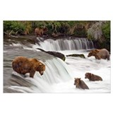 Brooks falls katmai Framed Prints