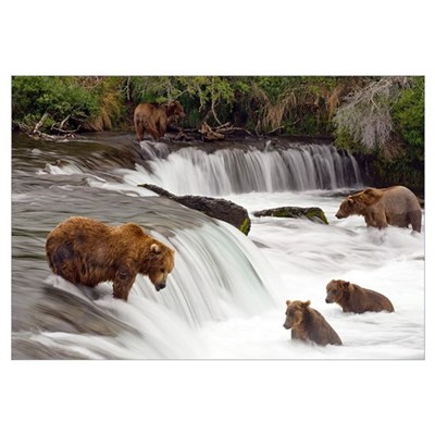 Grizzly bears fish at Brooks Falls in Katmai Natio Framed Print