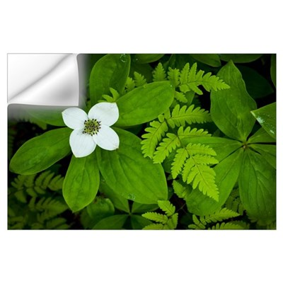 Close up of dwarf dogwood flower and ferns, Turnag Wall Decal