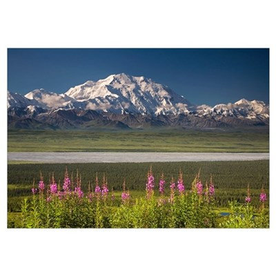 Mt. McKinley and the Alaska Range with fireweed fl Canvas Art